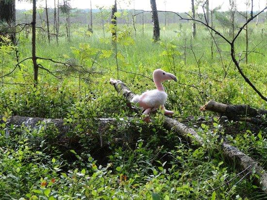 Berezina Biosphere Reserve: Blueberry heaven