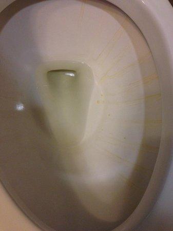Days Inn Palm Coast: gross toilet in our room 329
