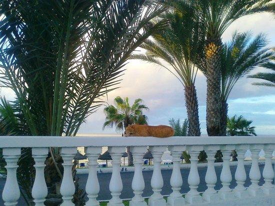Cleopatra Palace Hotel : Променада