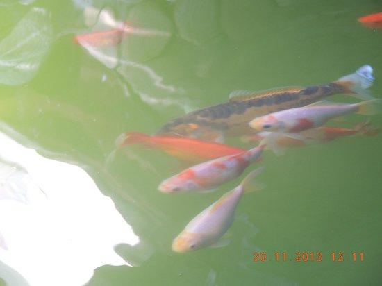 Katsiveli: пруд с рыбками
