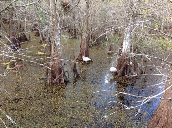 Six Mile Cypress Slough Preserve: de paseo con la naturaleza