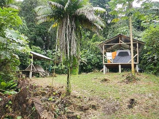 Huaorani Ecolodge: Covered tents at the camp ground