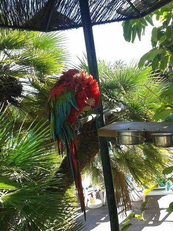 Hacienda San Jorge: hotels friendly parrot says