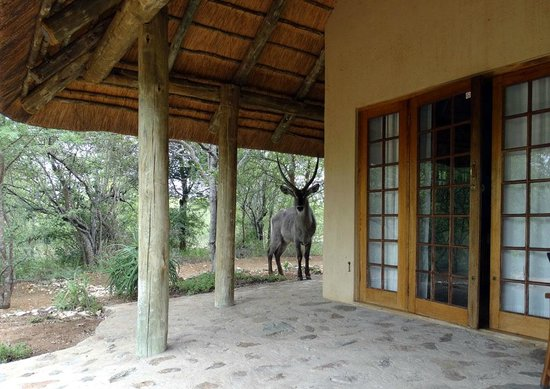 Casart Game Lodge : Waterbuck