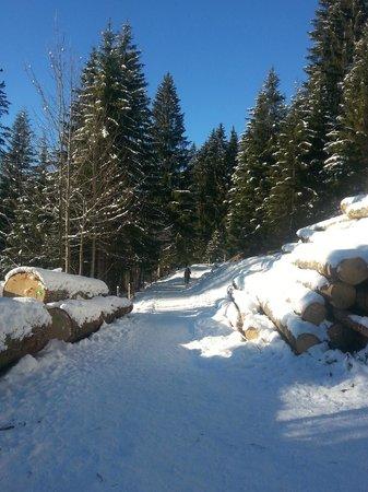 Söllereck: Romantischer Höhenweg