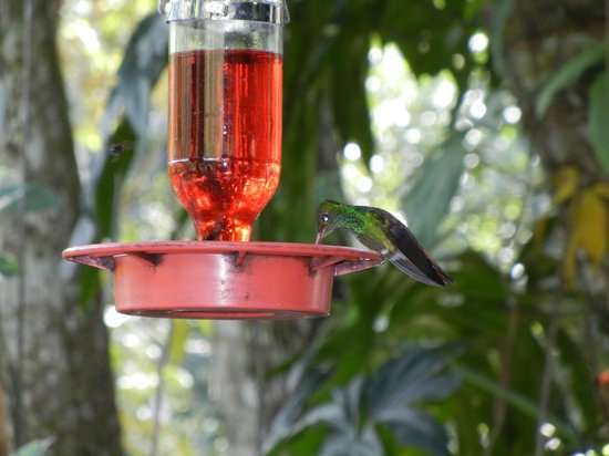 Black Rock Lodge: Hummingbirds were always buzzing around BRL!