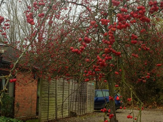 The Reading Lake Hotel: Winter berries in the car park