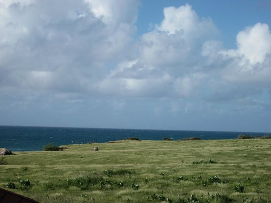 Hector's by the Sea: View of Esperanza Riding Company's pastures from Casita #1