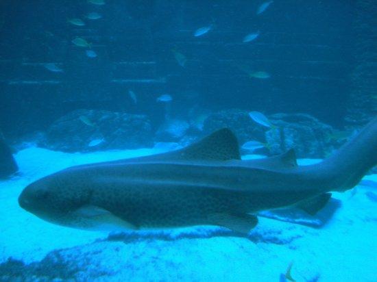 Marine Habitat at Atlantis: Large fish