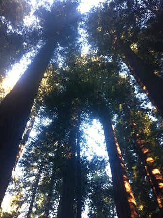 Avenue of the Giants: Magnificent redwoods