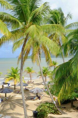 Rendezvous Resort : Tropical, Tropical