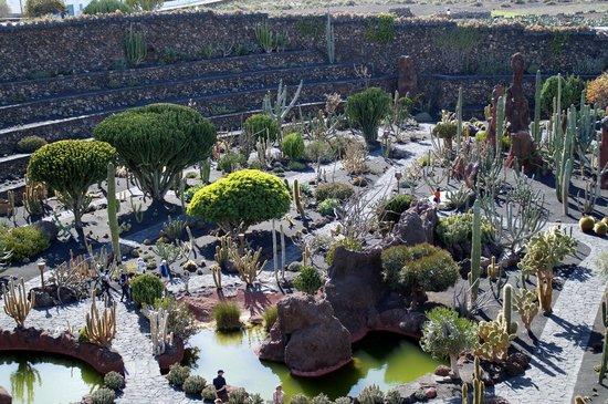 Jardín de Cactus: Vue générale du jardin de cactus