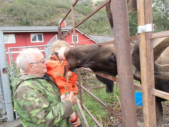Reindeer Farm : Kissing the moose