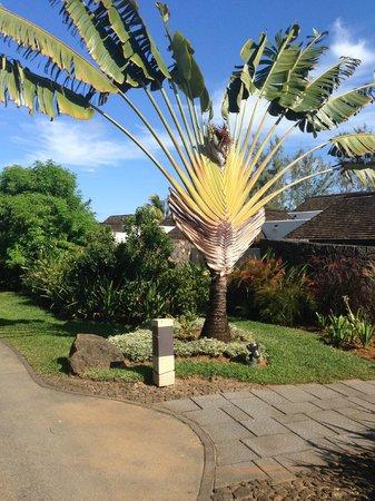 Four Seasons Resort Mauritius at Anahita: Gartenanlage