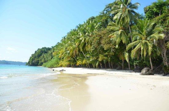Hotel Sol y Mar: Playa cerca de Isla Coiba