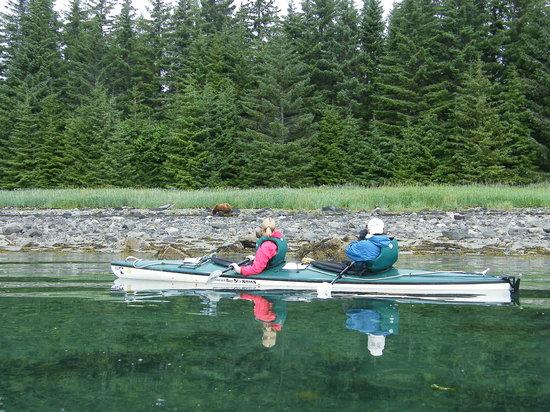 Glacier Bay Sea Kayaks - Day Tours: Cinnamon Black Bear. Photo: BJ Robinson