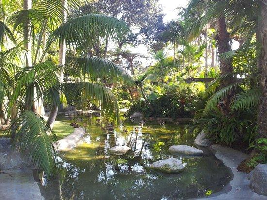 Bahia Resort Hotel: Gartenanlage