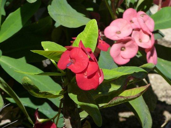 Los Adobes de Todos Santos : flowers in the cactus garden