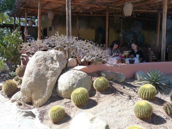 Los Adobes de Todos Santos : looking from the garden to the dining terrace