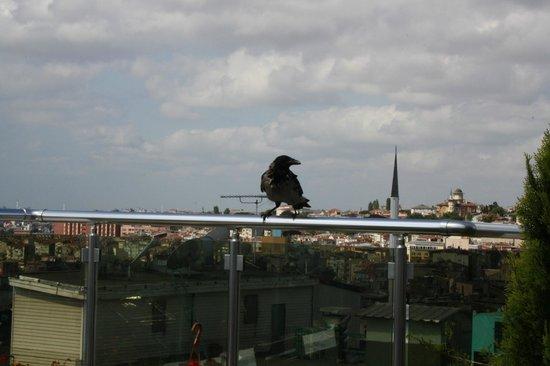 Aspen Hotel Ist: Вид с крыши