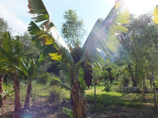 Reposo del Angel : Jardines