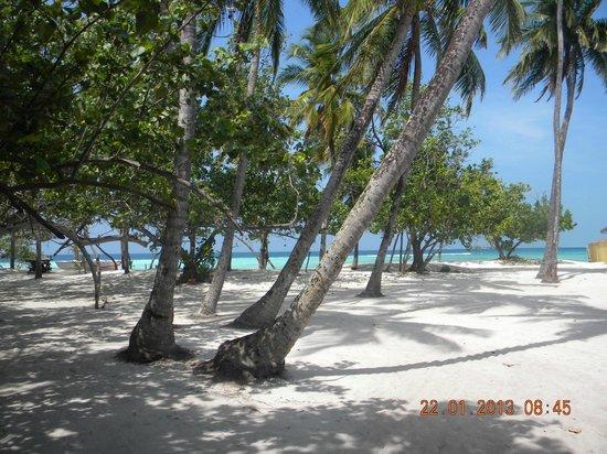 WhiteShell Beach Inn: ładny teren plaży tuż przy White Shell