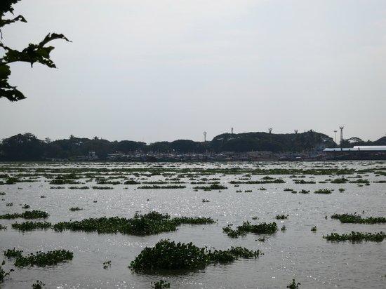 Taj Malabar Resort & Spa Cochin: View from garden area