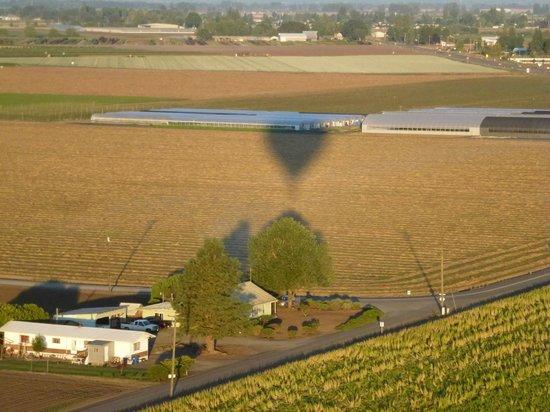Portland Rose Hot Air Balloons: Balloon shadow
