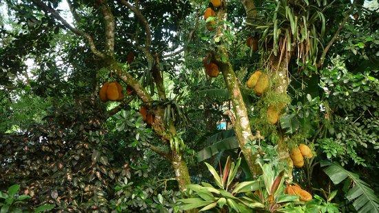 Pousada Guapuruvu : vue de la chambre fenêtre 2