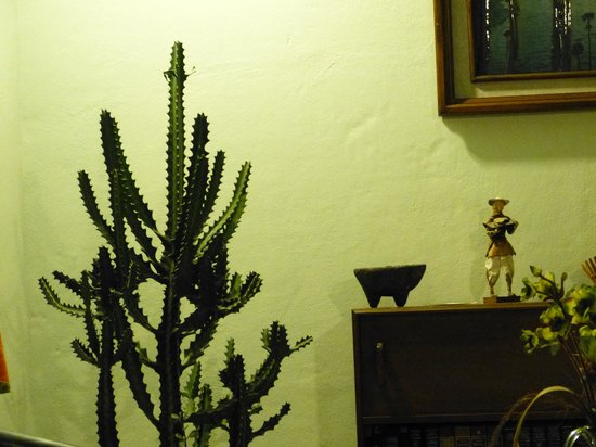 Hacienda Del Sol: cactus in our cottage