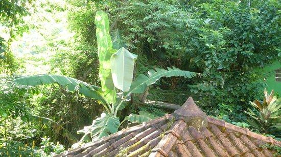 Pousada Guapuruvu: vue de la chambre fenêtre 1
