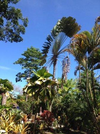 El Encanto Inn: il meraviglioso giardino