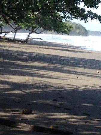 El Encanto Inn : playa nigra e l'oceano