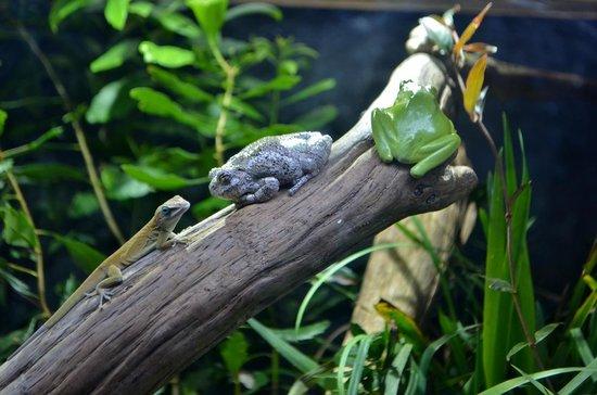 North Carolina Aquarium on Roanoke Island: Anole & Tree Frogs