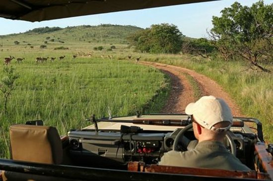 Nkomazi Game Reserve: On the morning game drive with Heinrich
