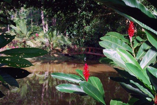 Villa Vanilla / Rainforest Spices: Beautiful grounds