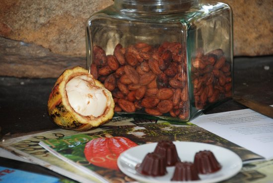 Villa Vanilla / Rainforest Spices: Stages of a chocolate