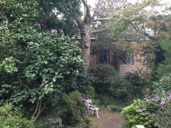 Camellia Cottage Bed & Breakfast : Back Yard