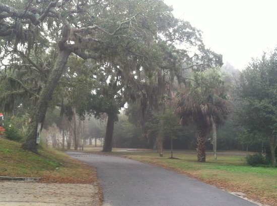 Surf Song Bed & Breakfast: Lovely Live Oaks in the mists of the back.