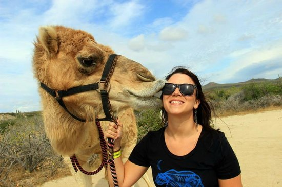 Cabo Adventures: Camel Kisses!