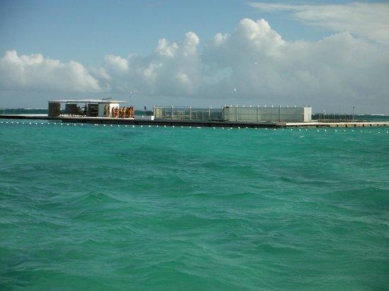 Dolphin Island : The entire excursion area