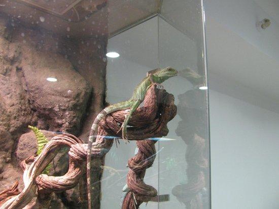 Museum of Natural History in Krakow: Lagarto