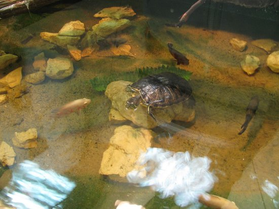 Museum of Natural History in Krakow: Tartaruga