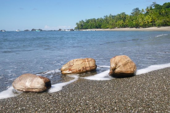 Pacheco Tours : snorkeling lunch spot