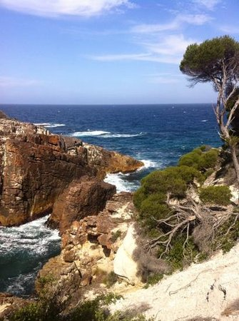 Merimbula Robyns Nest: White Rock, Bournda National Park