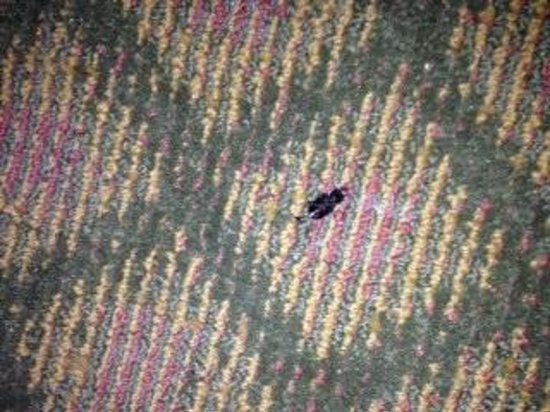 Comfort Inn: Dead bug behind the door.