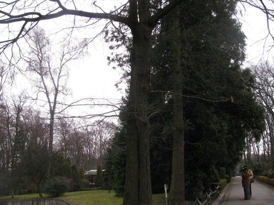 Krakow Zoo (Ogrod Zoologiczny) : Esquilos a brincar
