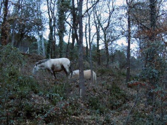 Fussimanya: ¡Incluso, nos encontramos ponys!