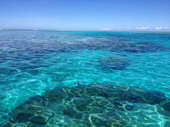 Lomani Island Resort: Snorkel trip