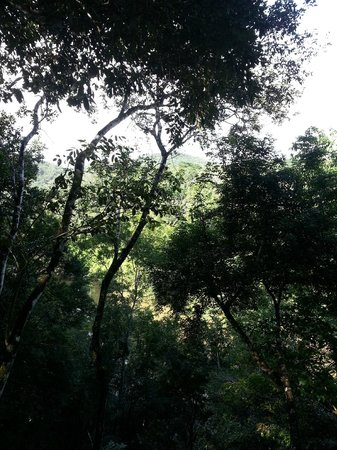 Table Rock Jungle Lodge : Overlooking Macal River